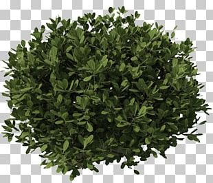 Shrub Plant Tree PNG