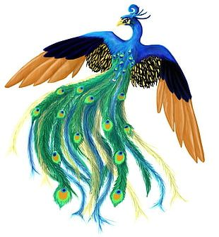 Asiatic Peafowl Bird Panthera PNG