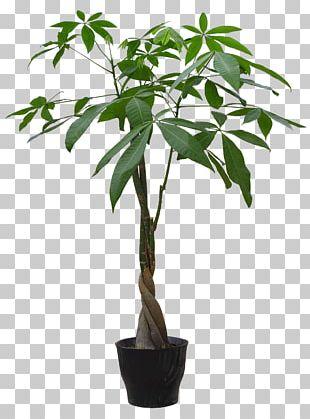 Houseplant Flowerpot Guiana Chestnut PNG