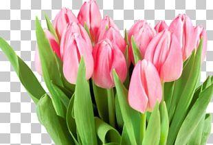 Flower Bouquet International Women's Day Tulip Woman PNG