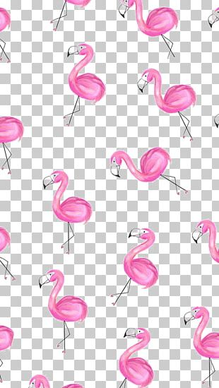 Greater Flamingo Paper PNG