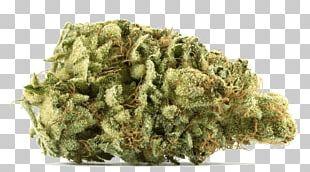 Medical Cannabis Gorilla Glue Kush Cannabis Sativa PNG