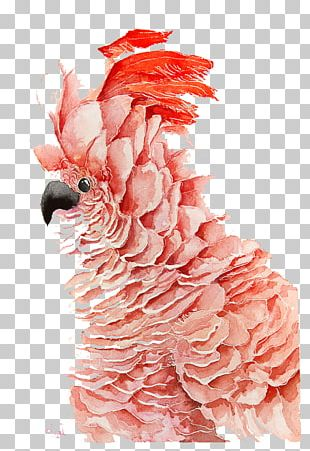 Bird Parrot Watercolor Painting Drawing PNG