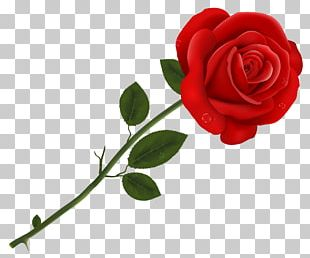 Lancaster Tea Red Rose Pizzeria Red Roses PNG