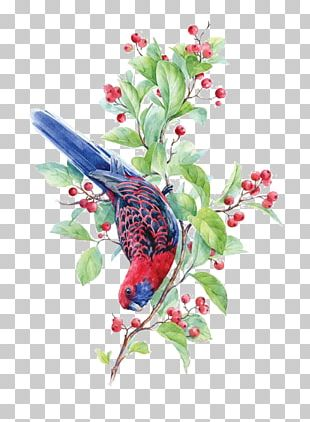 Bird Crimson Rosella Watercolor Painting Illustration PNG