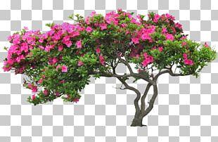 Tree Flower PNG