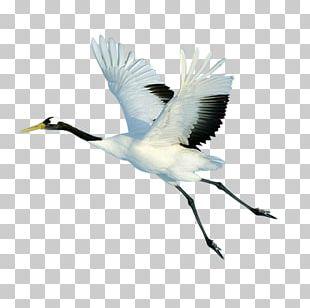 Red-crowned Crane Bird Flight PNG