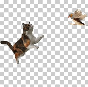 Cat Kitten Puppy Portable Network Graphics Transparency PNG