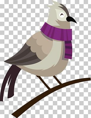 Bird Feather Beak Illustration PNG