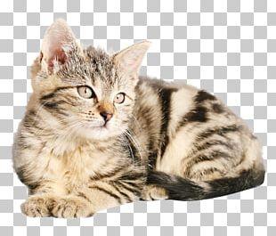 Tabby Cat Kitten Dog Popular Cat Names PNG