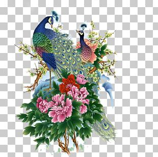 Asiatic Peafowl Bird Painting PNG