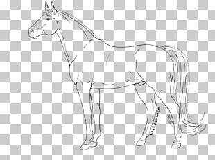 Mustang Pony Line Art Foal Star Stable PNG