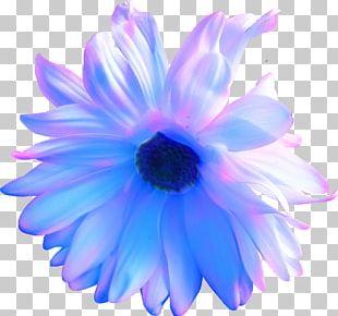 Flower Purple Blue Violet Petal PNG