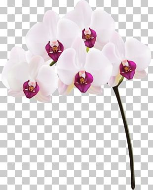 Orchids PNG