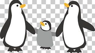 Emperor Penguin Illustration Southern Rockhopper Penguin King Penguin PNG