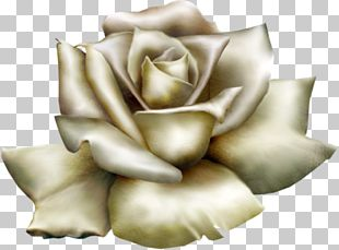 Rose White PNG