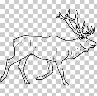 Elk Reindeer Drawing Line Art PNG