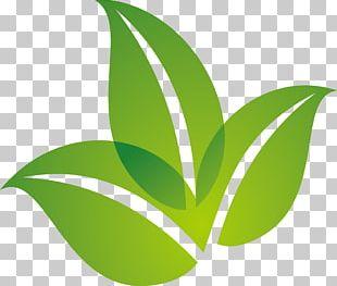 Leaf Logo PNG