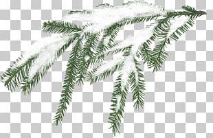 Snow Tree Branch Pine PNG