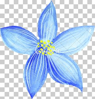 Drawing Watercolor Painting Blue Flower Pencil PNG