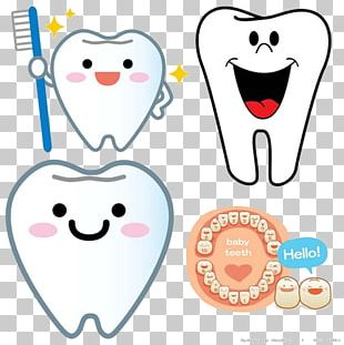 Deciduous Teeth Permanent Teeth Dentistry Tooth Eruption Child PNG