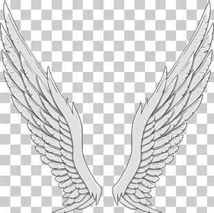 Angel Wing White PNG