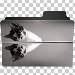 Cat Whiskers Black And White Kitten PNG
