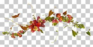 Flower Plant Vine Drawing Blog PNG