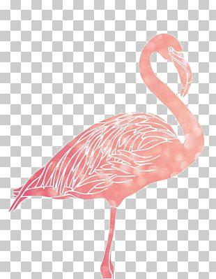 Flamingo 1080p PNG
