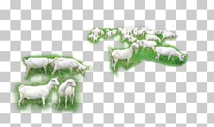 Goat Sheep Cattle Herd PNG