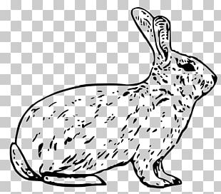 Arctic Hare Snowshoe Hare Easter Bunny Mountain Hare PNG