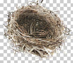 Bird Nest Bird Nest PNG