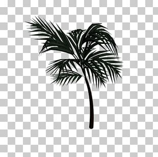 Asian Palmyra Palm Arecaceae Date Palm Leaf Drawing PNG