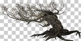 The Elder Scrolls V: Skyrim The Elder Scrolls Online Root Tamriel Plant PNG