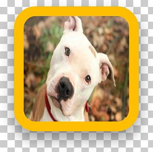 American Pit Bull Terrier Greater Swiss Mountain Dog Dogo