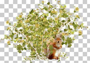 Tree Squirrels Shrub PNG