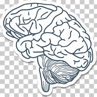 Blue Brain Project Cerebrum Drawing PNG