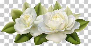 Flower Jasmine White Rose PNG