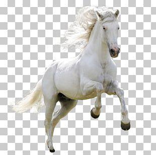 Mongolian Horse Arabian Horse Ferghana Horse Akhal-Teke Pony PNG