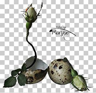Flower Bouquet Easter Egg Plant Stem PNG
