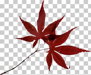 Autumn Leaf Color Autumn Leaf Color Fotolia PNG