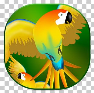 Macaw Parrot Beak Toucan Yellow PNG