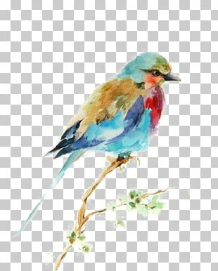 Bird Watercolor Painting Drawing Printmaking PNG