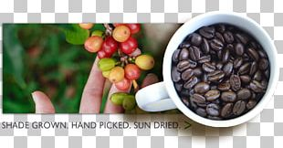Chocolate-covered Coffee Bean Instant Coffee Finca La Despensa Aroma Of The Andes Coffee PNG
