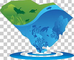 Marine Mammal Marine Biology Organism Water PNG