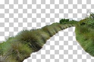 Populus Nigra Tree Architectural Rendering PNG