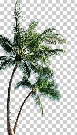 Island PNG
