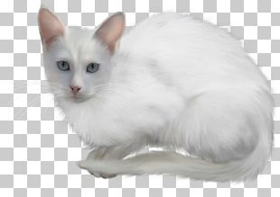 Kitten Turkish Angora Animal Polar Bear PNG