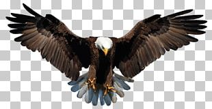 Bald Eagle White-tailed Eagle Drawing PNG
