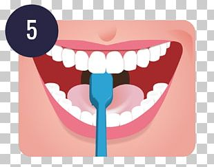 Tooth Brushing Dentistry Human Tooth Teeth Cleaning PNG